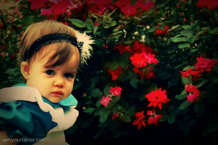 wm-aly-roses